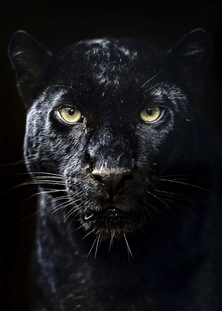Black Jaguar Art Photojournalism In 2020 Black Jaguar Animal Black Panther Cat Black Panther Tattoo