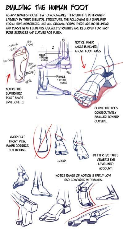 Construccion De La Pie Humano Anatomia Referencia De Anatomia Cuerpo Humano Dibujo