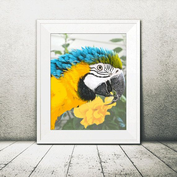 Beautiful Blue and Gold Macaw Parrot Fine Art Print | Perfect as ...