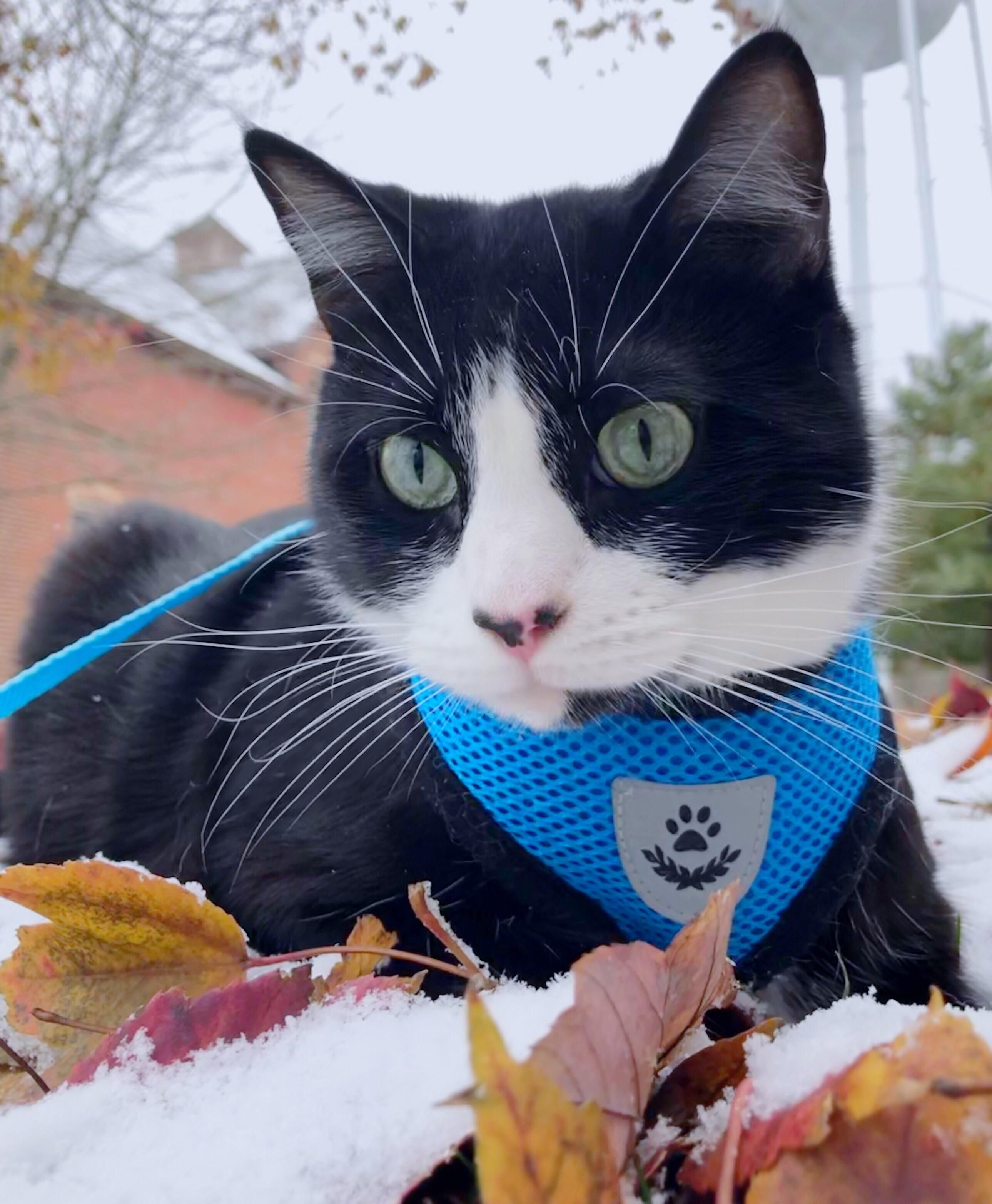 The Outernet Is Too Cold Return Me The Warmth Please Https Ift Tt 2fi98ae Cute Cats Cats And Kittens Cat Pictures For Kids