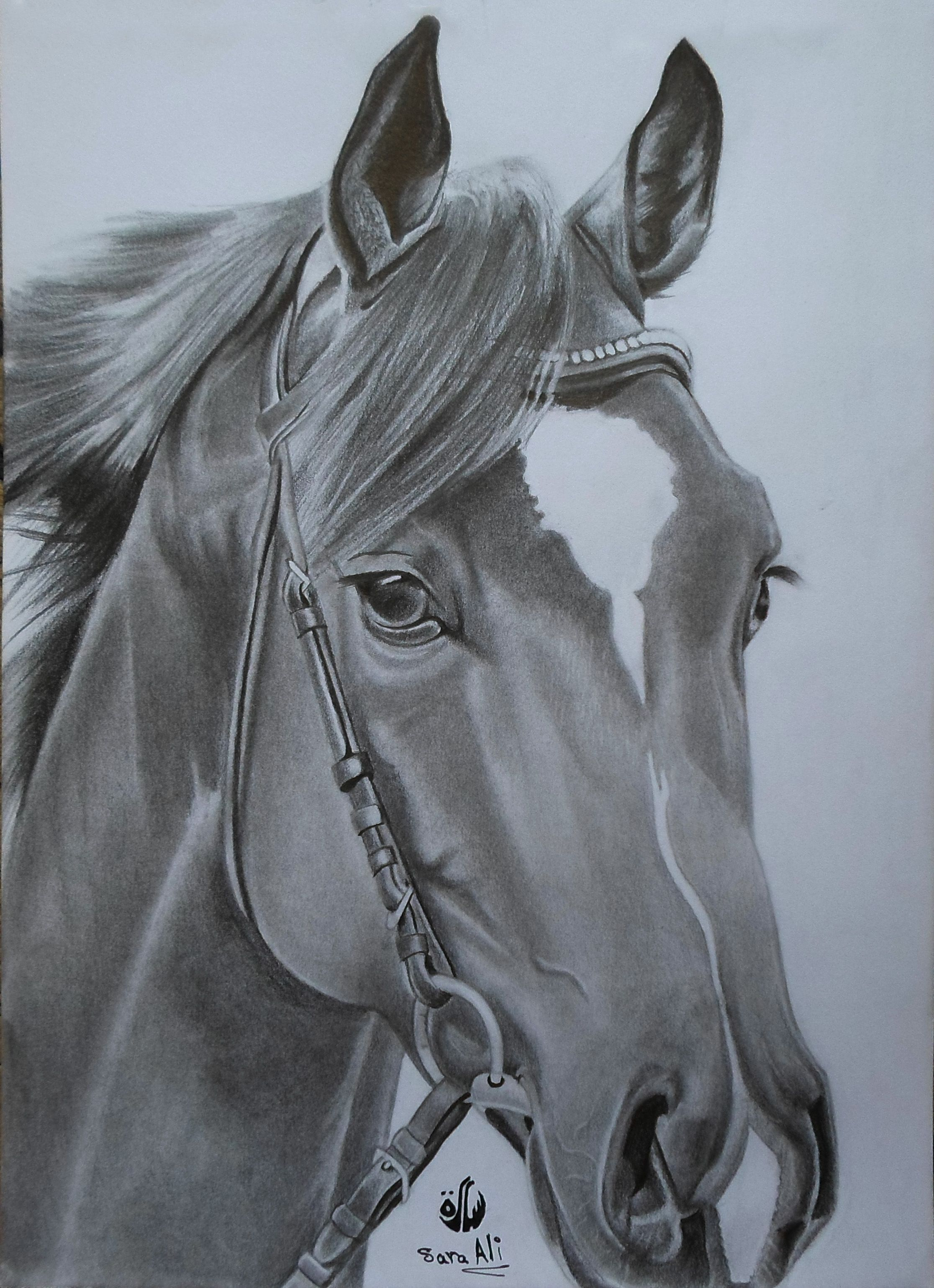حائط الابداعات طفرة جوز Art Drawings Horses