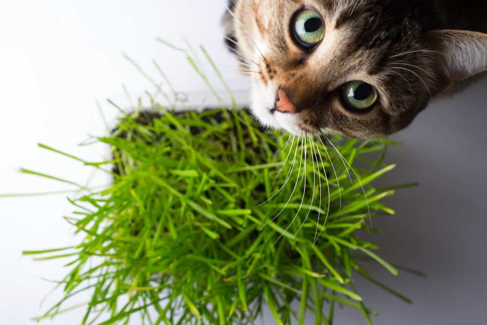 29 Houseplants Safe For Cats (With Pictures) in 2020 Cat