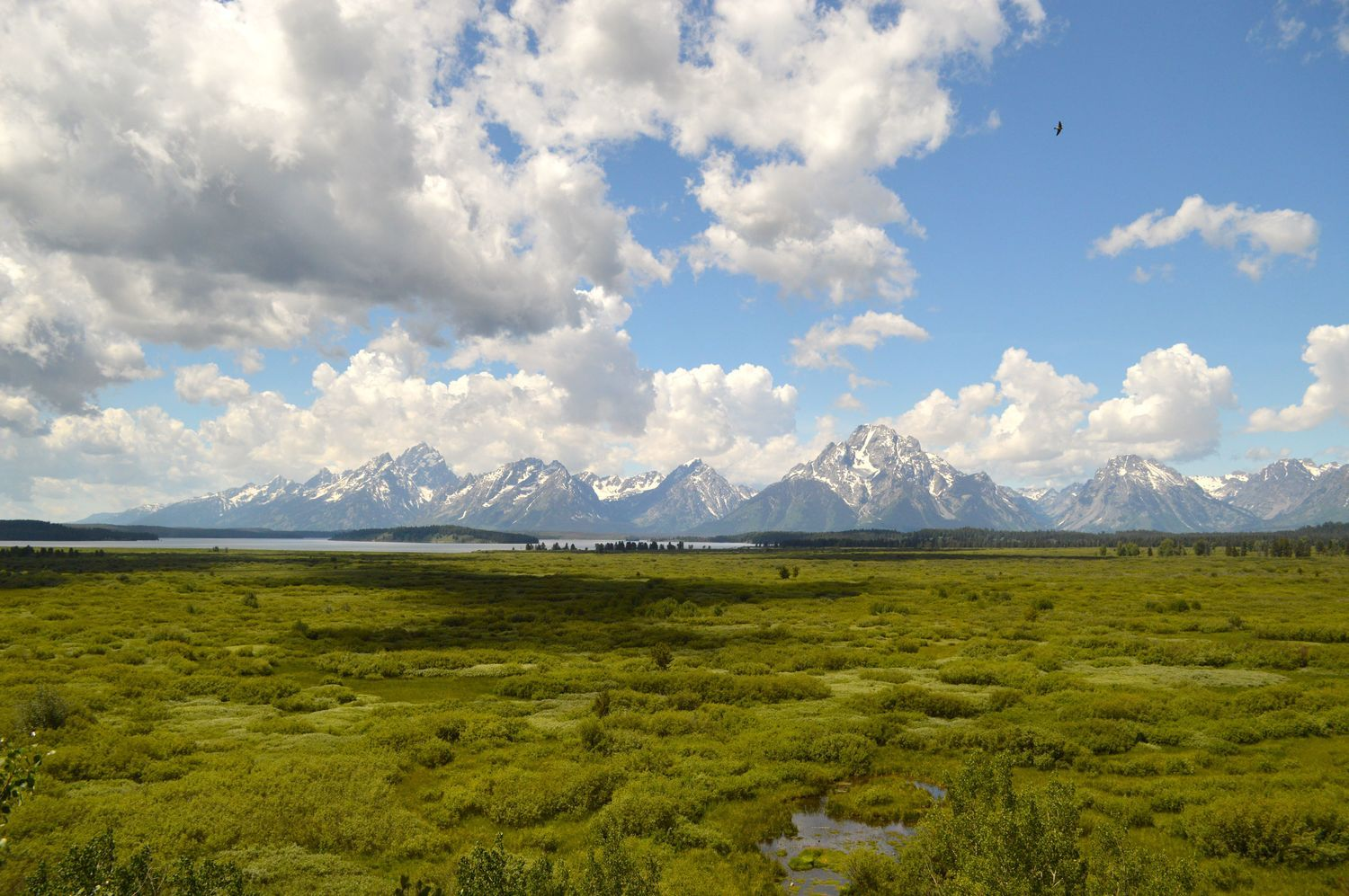 Summers in Wyoming the Ultimate Jackson Hole Guide (With