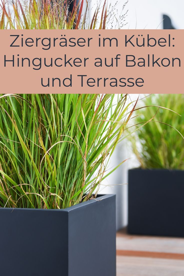 Ziergräser im Kübel: Hingucker auf Balkon und Terrasse