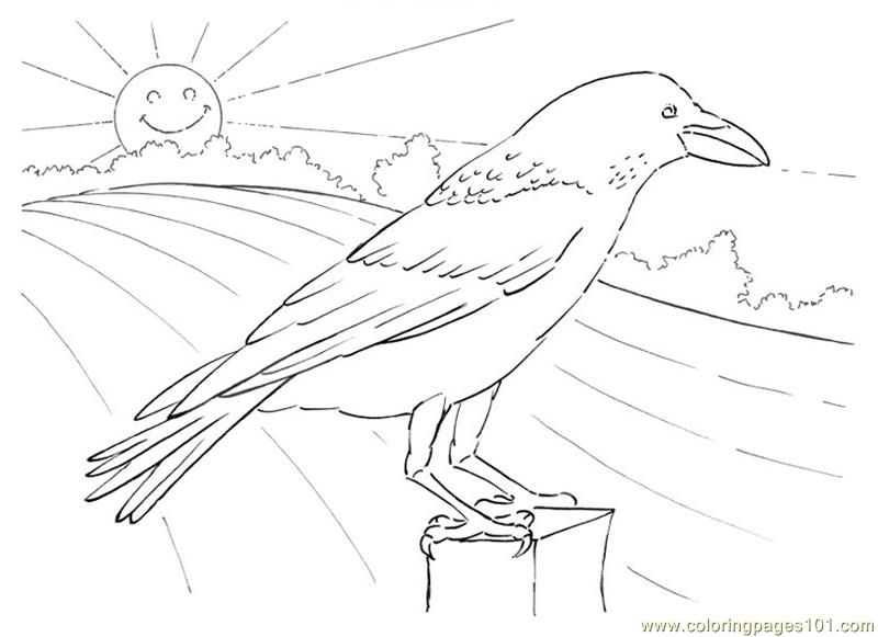 Thirsty Coloring Pages Crow Looking Birds Coloring Pages