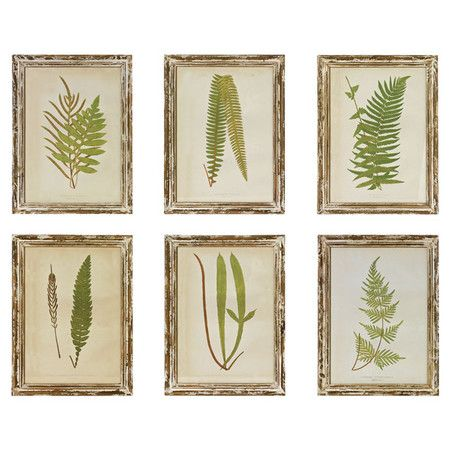 Six framed fern prints. Product: 6 Piece wall art setConstruction ...