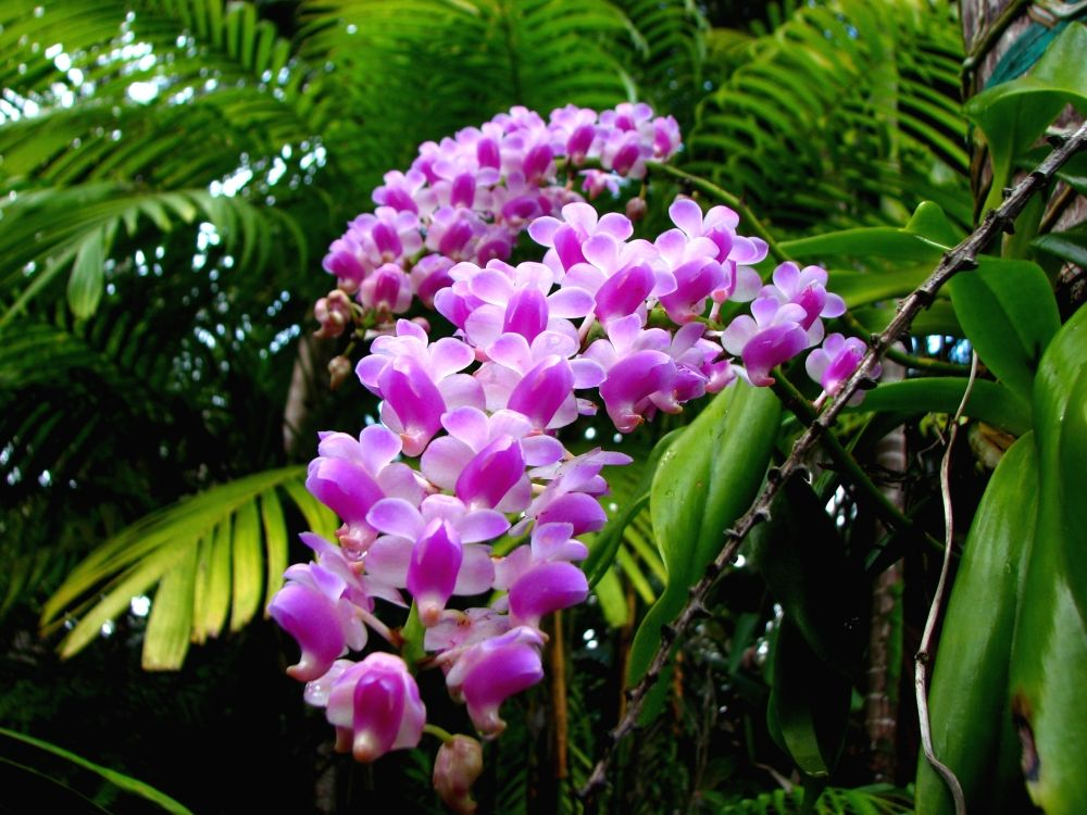 Orchids In The Tropical Rainforest Orchid Flowers