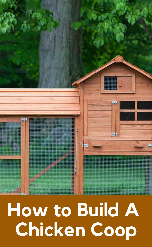 How To Build A Chicken Coop Diy Building A Chicken Coop Diy