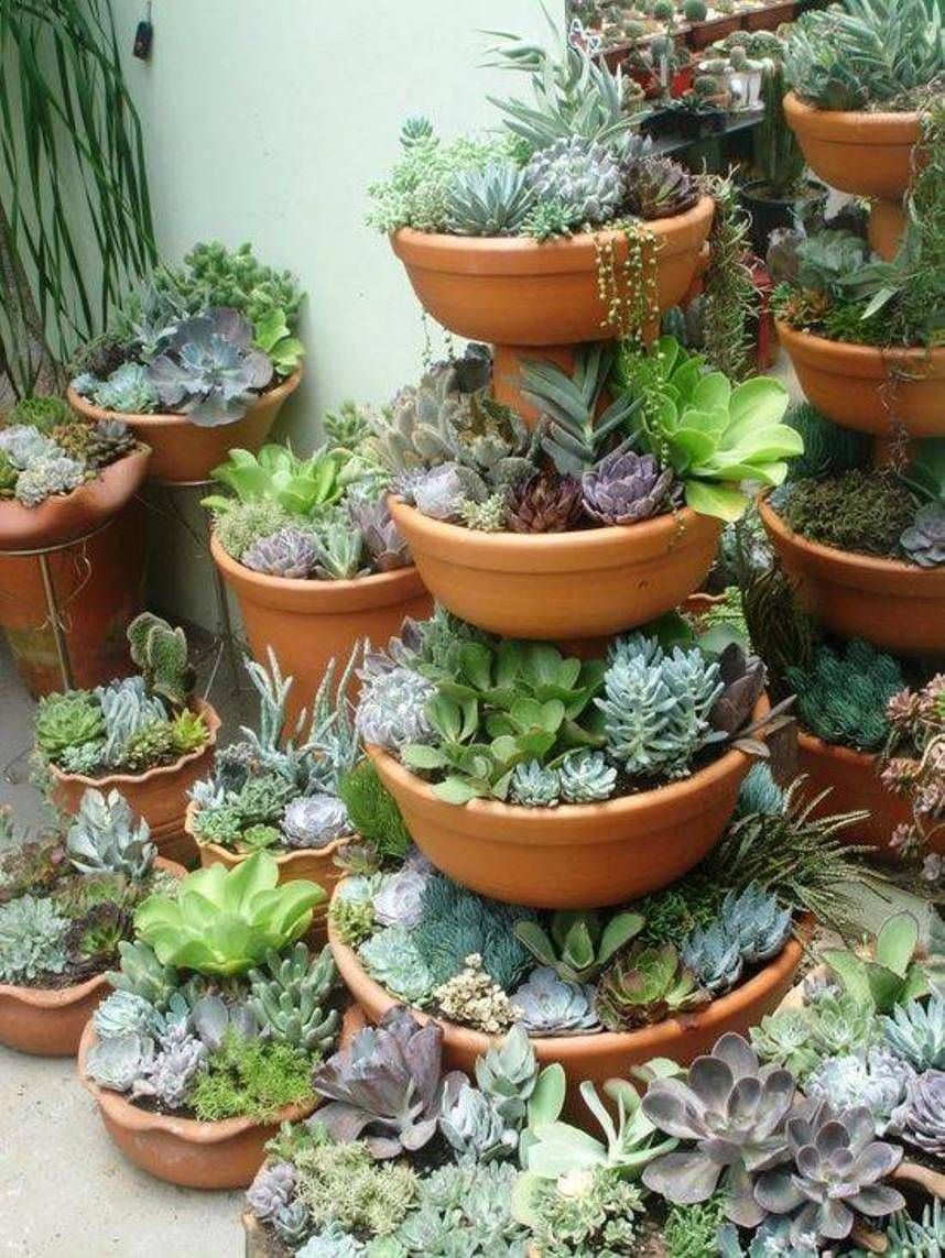 Tiered Terracotta Garden Design Succulents Succulents In Containers Plants