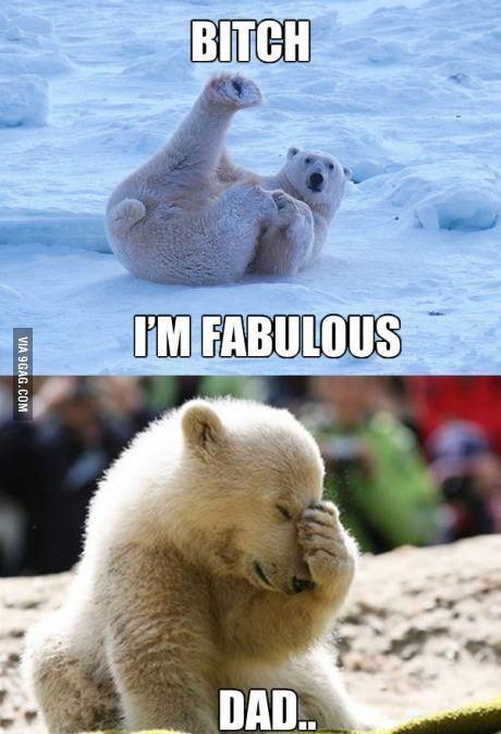 I'm fabulous   Funny bears, Polar bear jokes, Cute animal ...