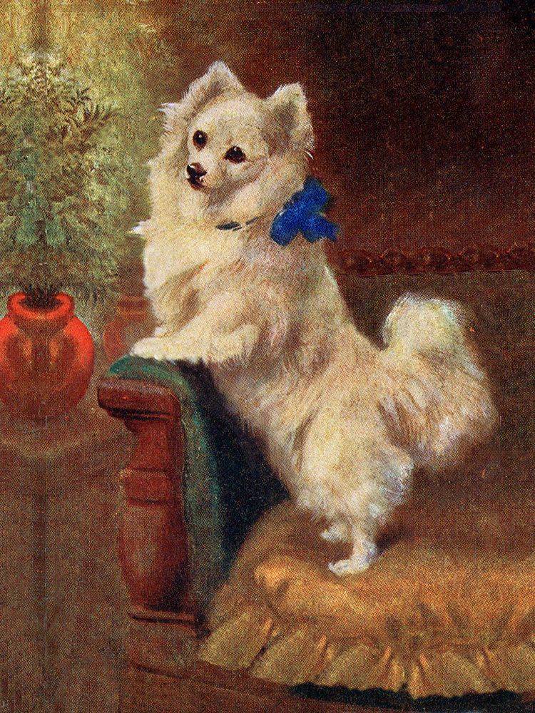 POMERANIAN PUPPY CHARMING LITTLE DOG PRINT MOUNTED READY TO FRAME