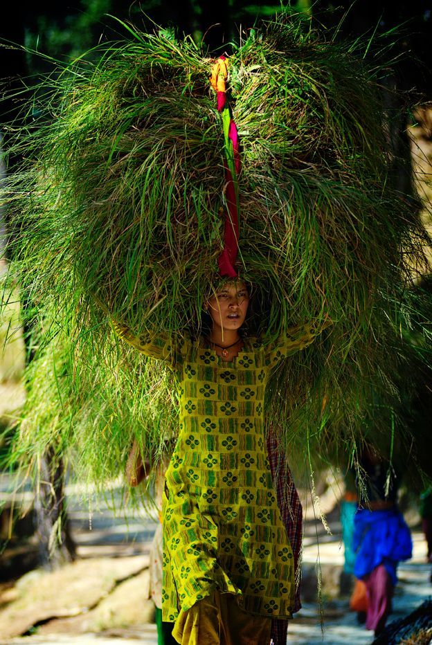 India.  Woman carrying grass bought from a market to be used as cattle feed, Kumaon. Photo: Michael Gebicki: