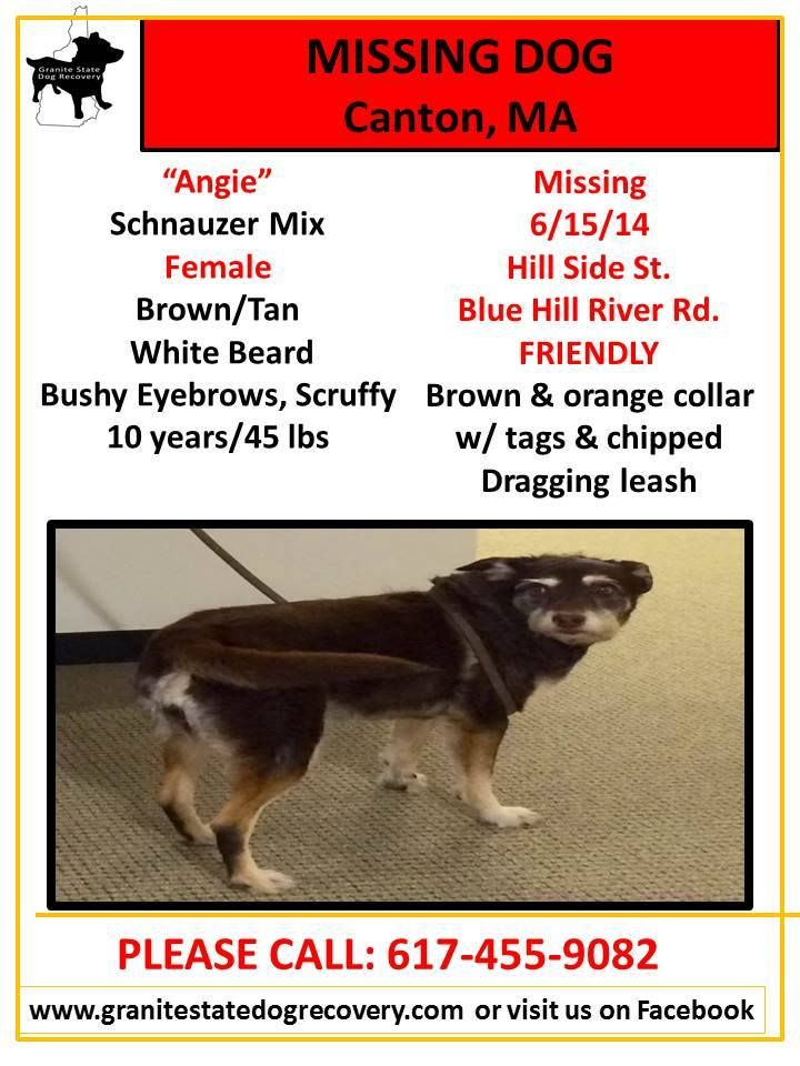 Angie Sighting In Sharon Ma Angie Was Seen In The Area Of Bay Road And Castle Road Please Do Not Go Searching On Foot We Do Not Wa Lost Dogs