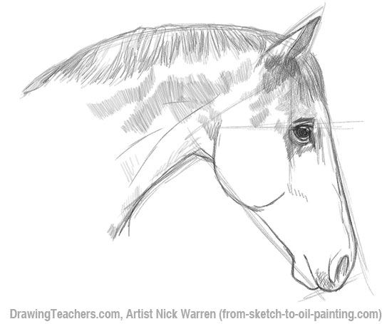 Learn horse drawing in pencil with this step by step drawing lesson by nick warren this lesson focuses on how to draw a horses head in profile