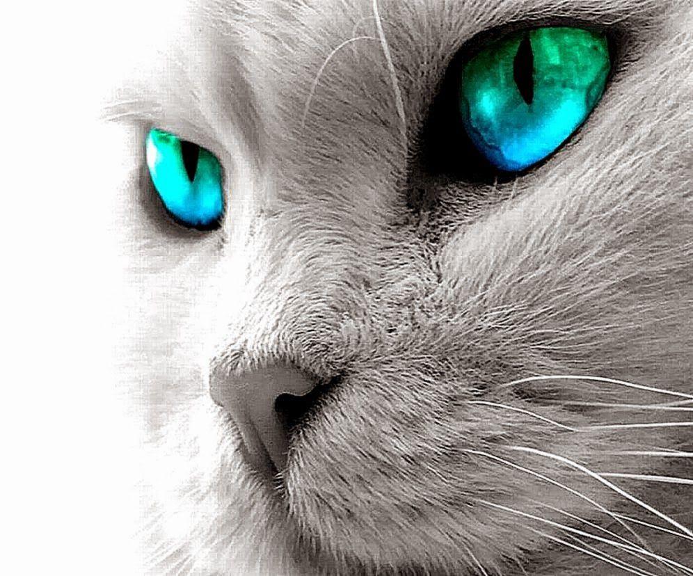 Pin Oleh Puspo Wungu Di Cat Lovers Wallpaper Kucing Kucing Putih Kucing Dan Anak Kucing