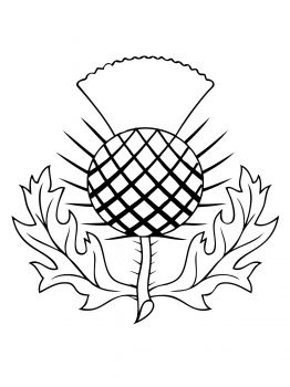 Coloring Pages About Scotland Scottish Thistle Coloring Page
