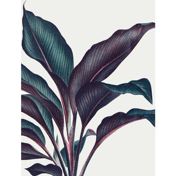 Plant 3a Art Print (66.670 COP) ❤ liked on Polyvore featuring home, home decor and wall art
