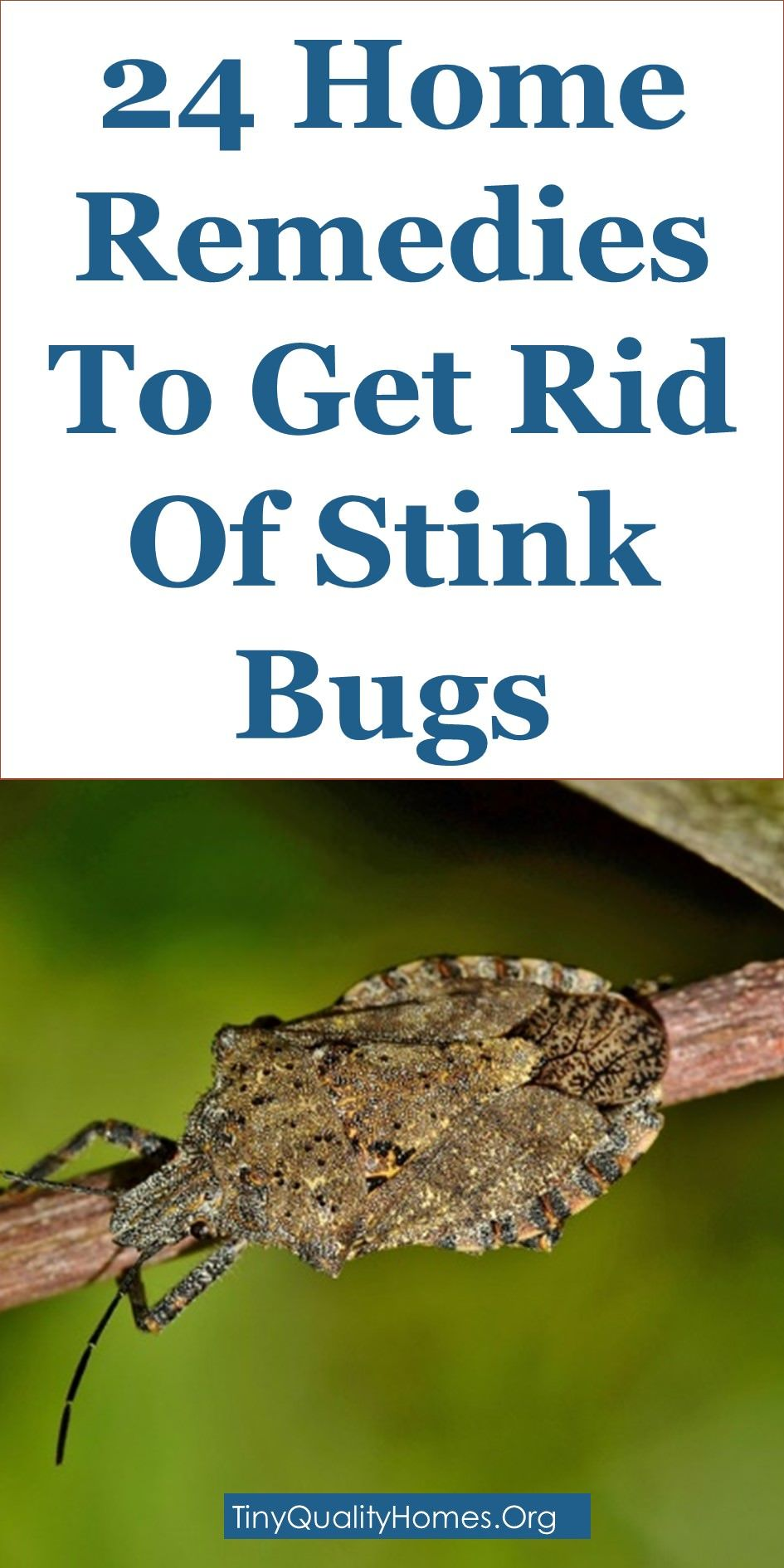 0e1e6ba76c224de0a23e72a1552be7ac - How To Get Rid Of Stink Bugs At Home