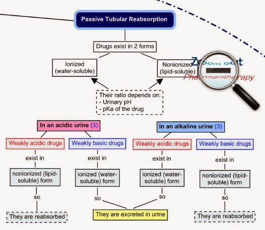 pharmacokinetics and drug drug interactions biology essay Each of the phases is subject to physico-chemical interactions between a drug and an organism, which can be expressed mathematically  a drug's pharmacokinetics.