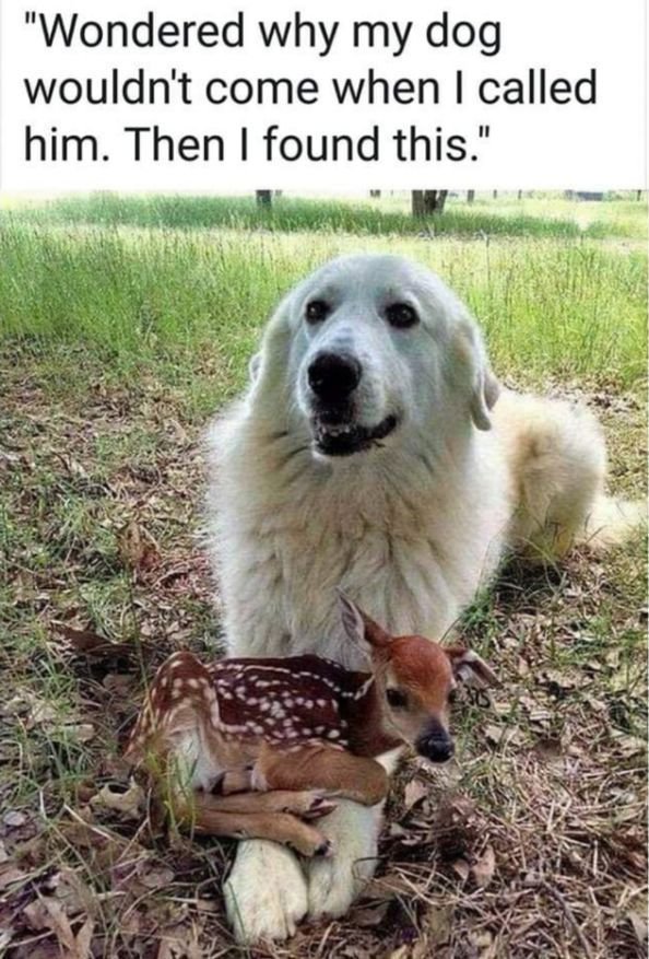 Dog and Friend - Dog and Friend    There is a goodness is dogs that just floors me. #gooddogs #dogmemes #funnydogs