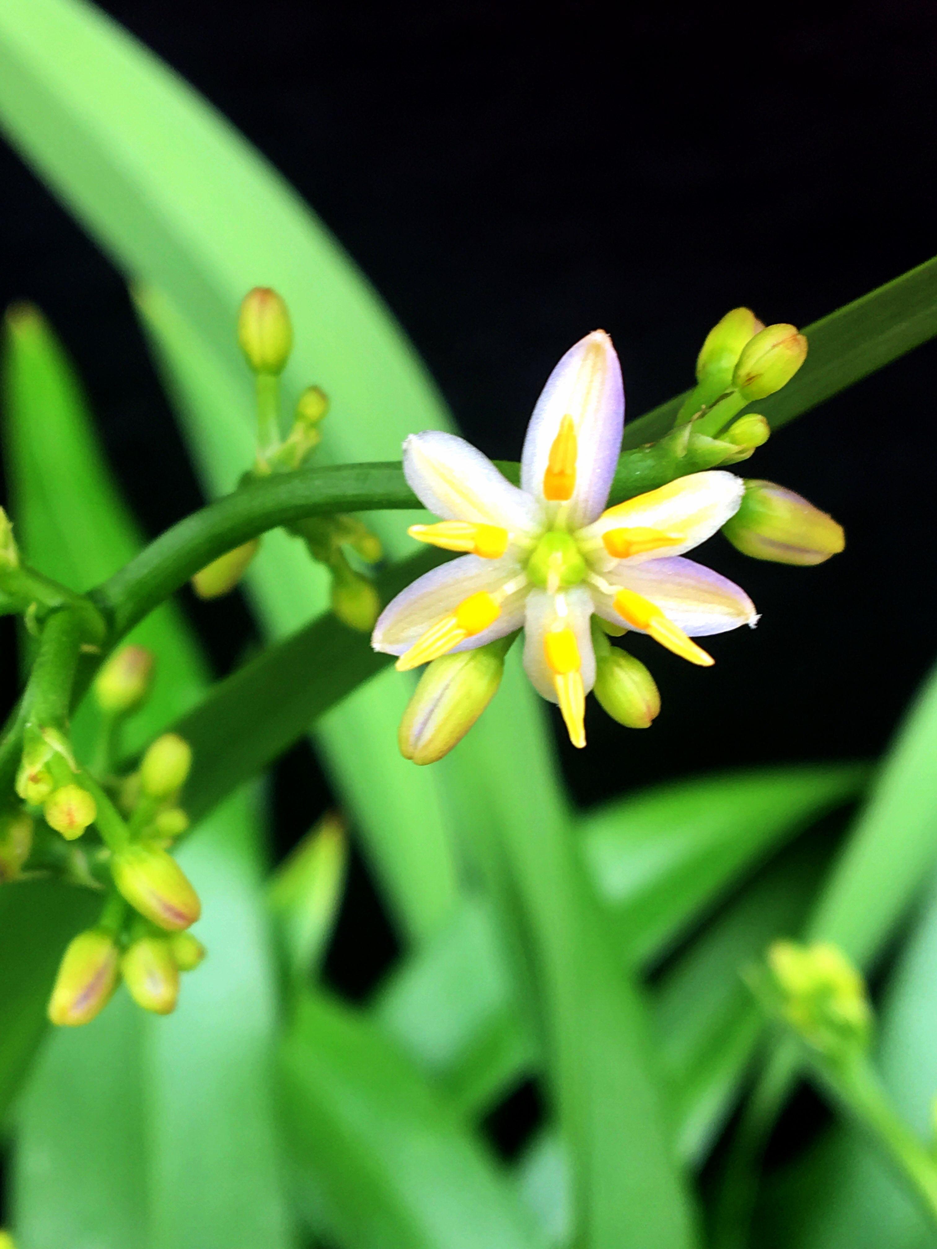 Pin by hui k maoli ola native hawaiian plants and landscaping native plants hawaiian izmirmasajfo