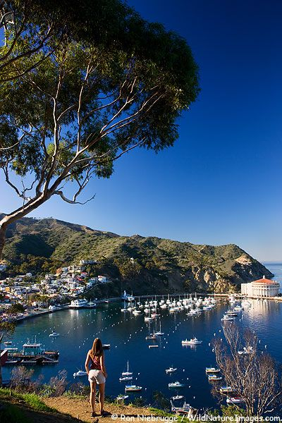 Catalina Island want to camp out here and visit the art