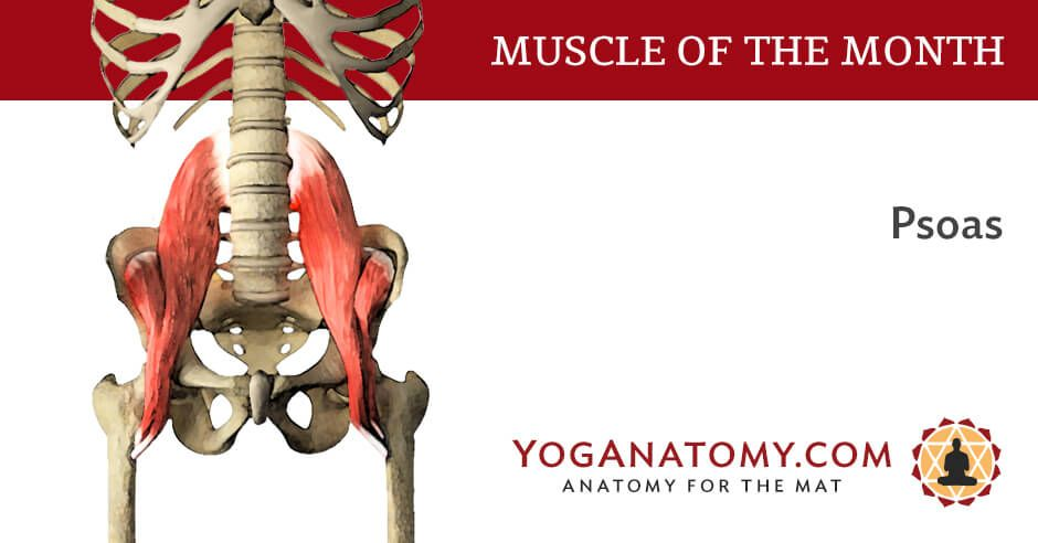 The Psoas Muscle Pinterest Yoga Anatomy Muscles And Yoga