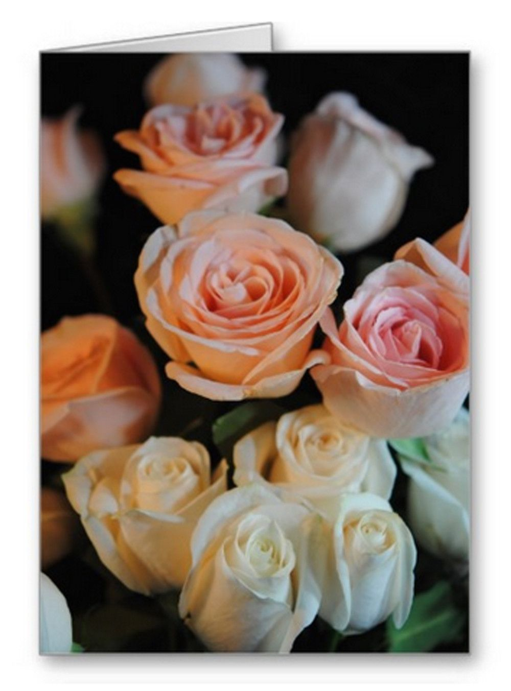 Pink and White Roses Blank Greeting Card | Independent Art Gifts By Blooming Vine Design