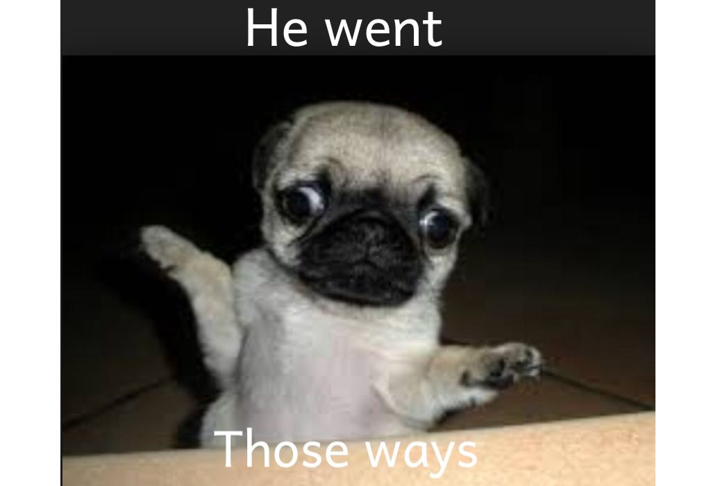 He Went Those Ways Confused Pug Puppie Pugs Funny Funny