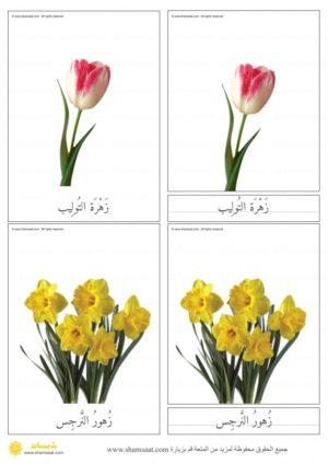 بطاقات الأزهار بصور فوتوغرافية بطاقات المونتسوري المكونة من ثلاثة أجزاء 4 Plants
