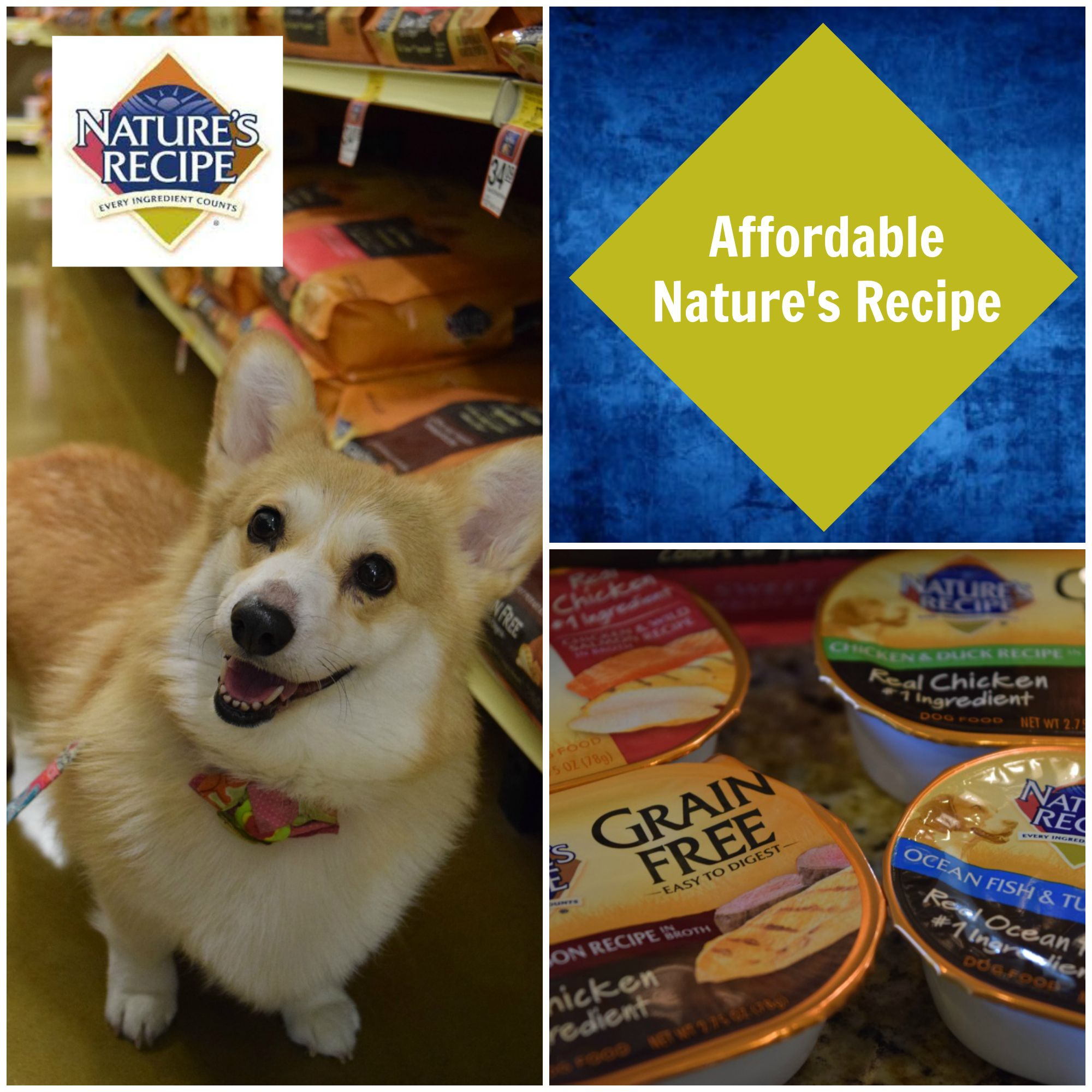 Choosing An Affordable Grain Free Pet Food Naturesrecipe Grain Free Pet Food Dog Boarding Near Me Food Animals