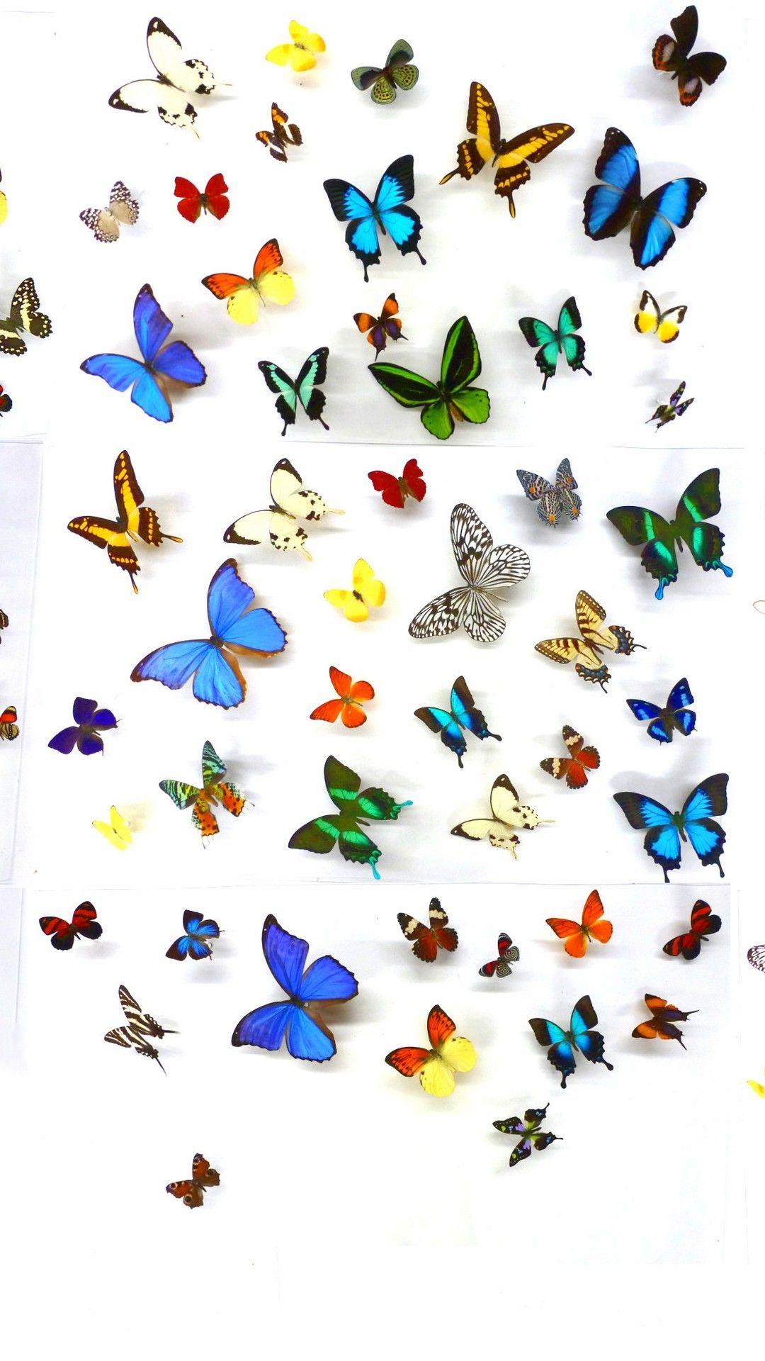 Wallpaper iPhone Butterfly Design | Butterfly wallpaper ...