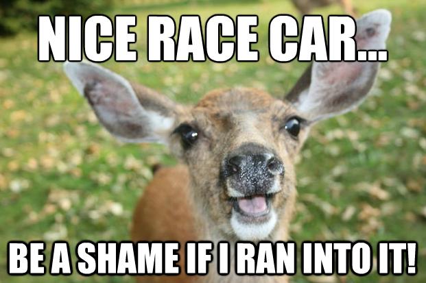 0e21618f1c55aa0fbb35e9b79249dbd0 deer meme google search lul 3 pinterest meme,Funny Deer Memes