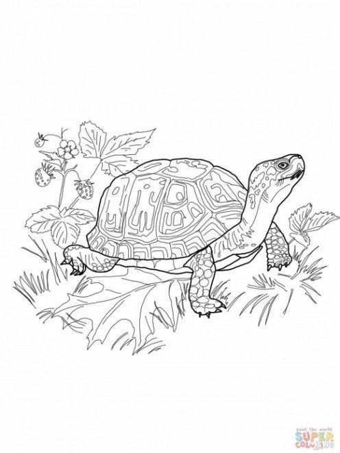 What You Should Know About Eastern Box Turtles Free Color Pages