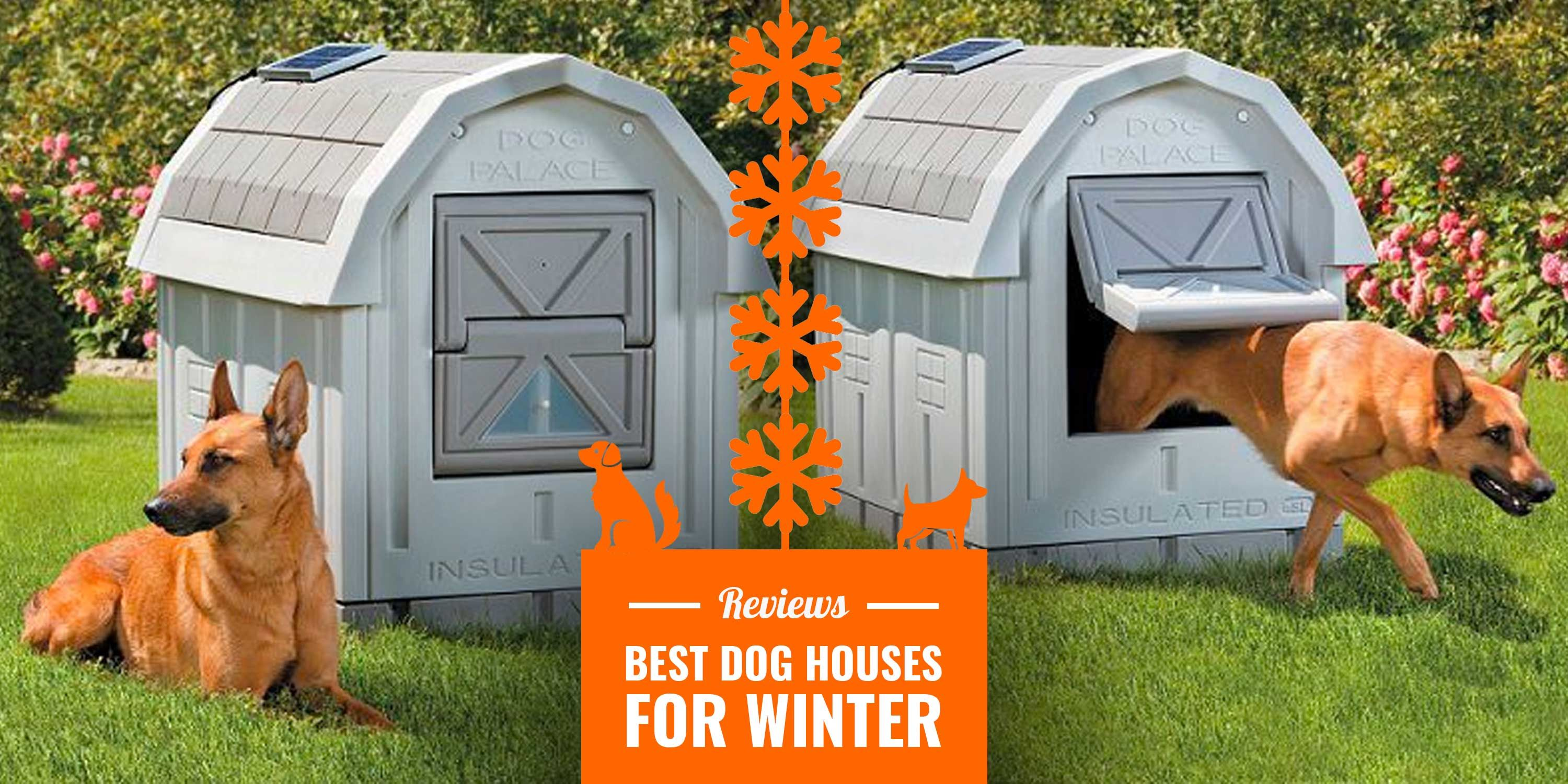 10 Best Dog Houses for Winter — Reviews, Insulation, Tips