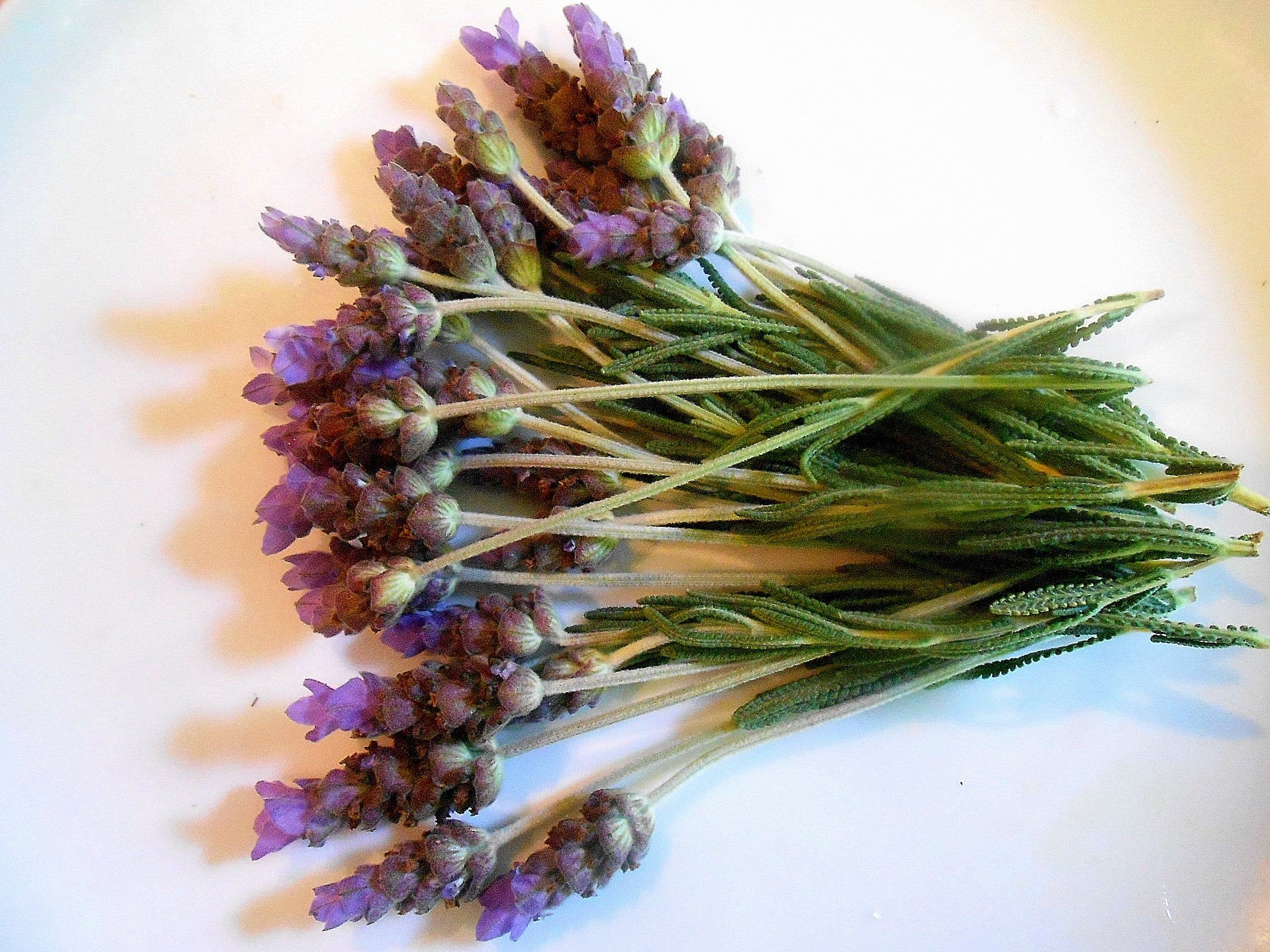 Fresh Lavender Flowers Lavender Branches Fragrant Edible Decorative 25 Stems Restaurant Supply Overnight In 2020 Culinary Lavender Organic Herbs Lavender Flowers