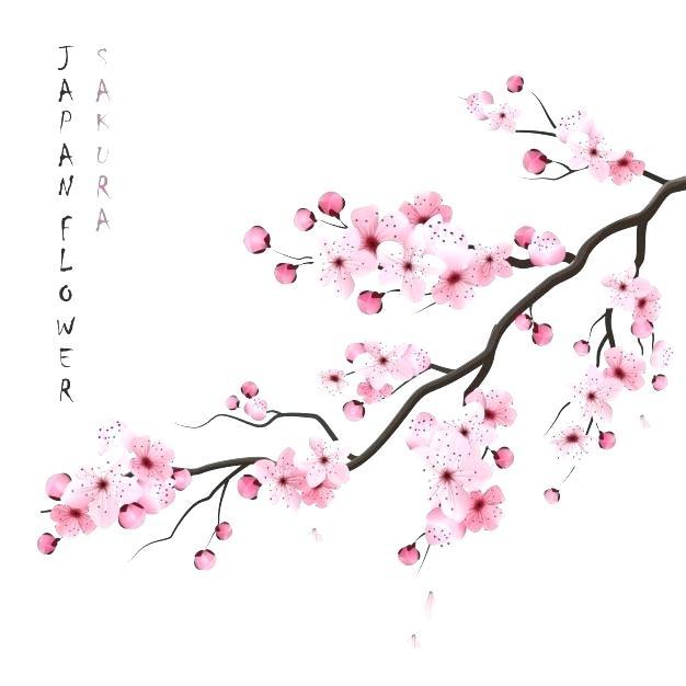 Cherry Blossom Branch Google Search Cherry Blossom Art Cherry Flower Cherry Blossom Branch