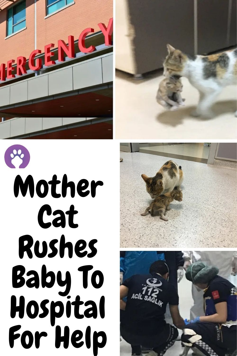 Mother Cat Rushes Baby To Hospital For Help In 2020 Animals And Pets Cute Baby Animals Funny Animals