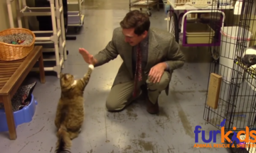 Animal Shelter's Hilarious Cat Commercial Is A Low-Budget Masterpiece | The Huffington Post