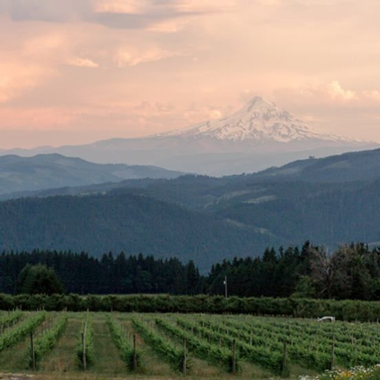 Gorge Crest Vineyards Outdoor Wedding Venue (With Images