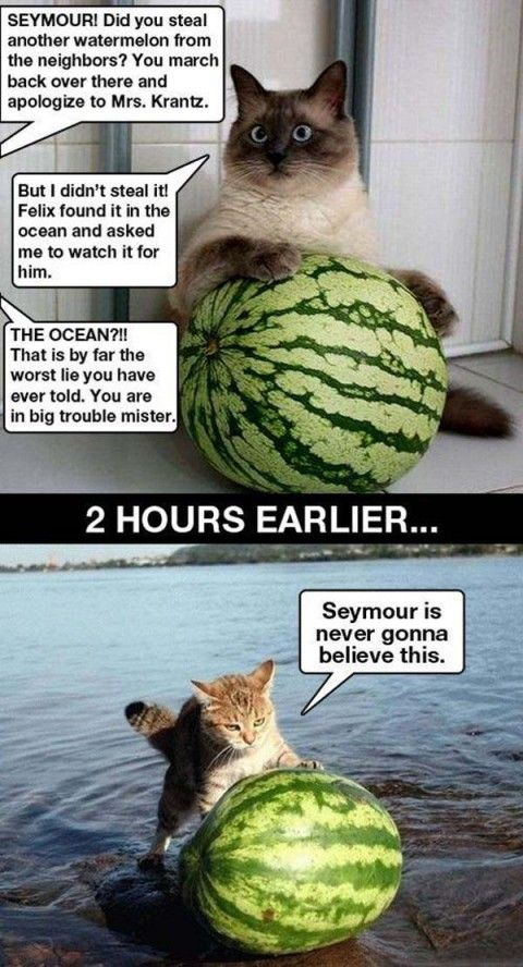 Funny Cats Of The Day  Photo Humor Biz