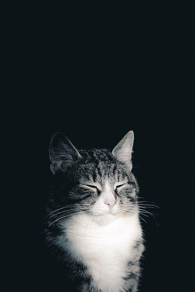 Freeios7 In The Dark Parallax Hd Iphone Ipad Wallpaper Cute Cat Wallpaper Cat Wallpaper Animals Beautiful
