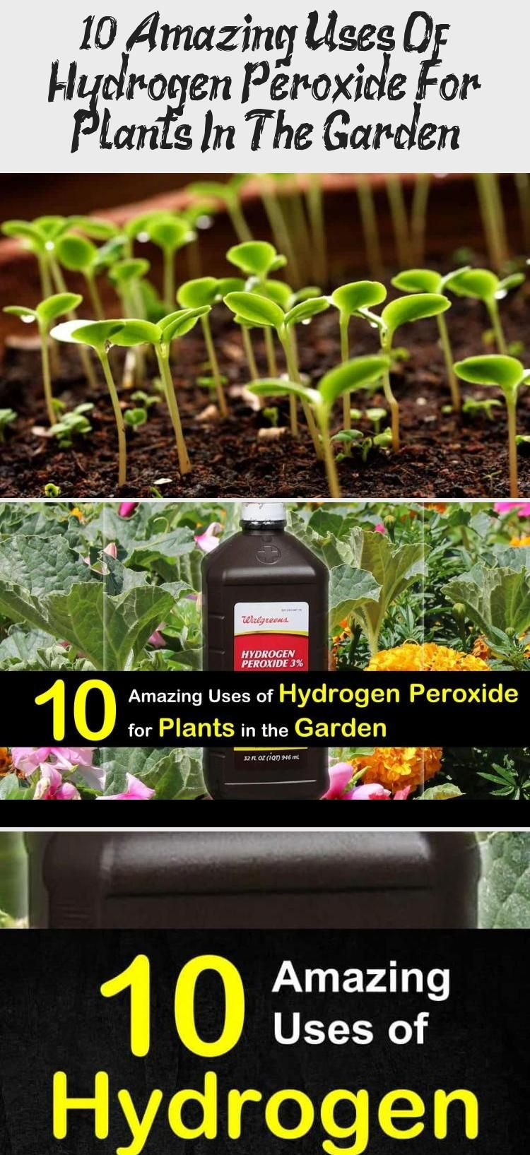 10 Amazing Uses Of Hydrogen Peroxide For Plants In The in