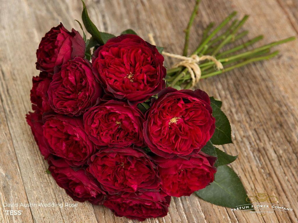 David Austin Wedding Rose Tess Scent Garden Garden Rose Bouquet Wedding Rose Wedding