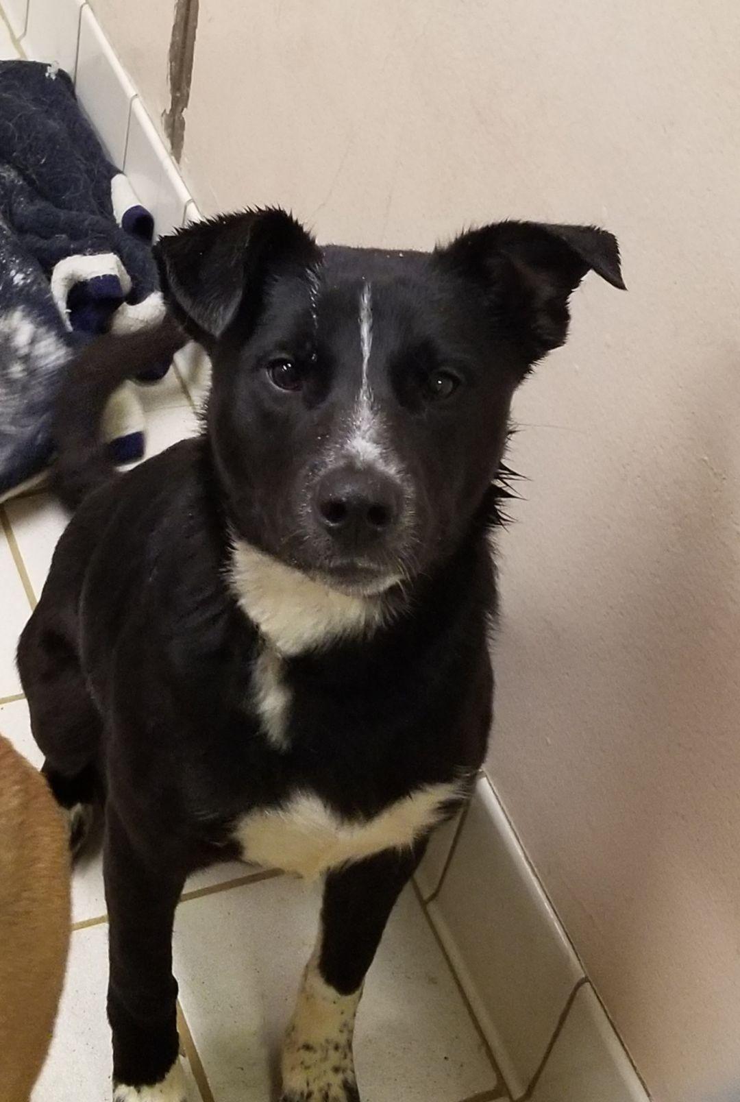 Adopt Journey on Dogs, kids, Labrador retriever mix, Pet