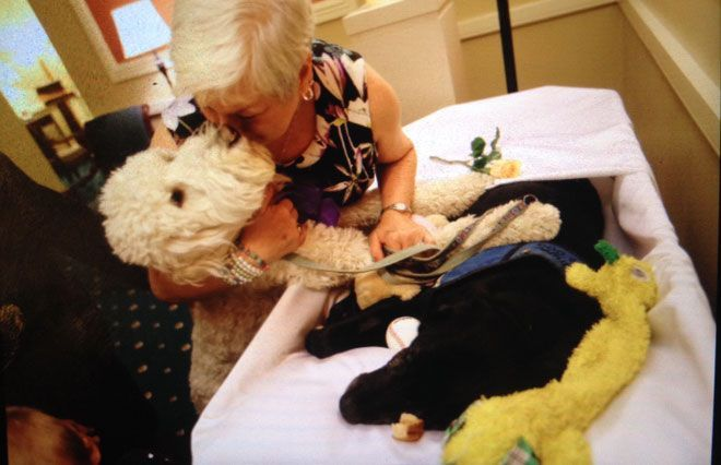 Therapy Dog S Funeral Includes Music Tennis Balls With Images Therapy Dogs Grief Therapy Pet Cemetery
