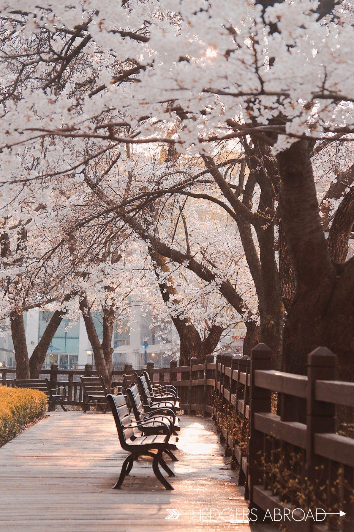 9 Absolutely Stunning Spring Places Outside Seoul Hedgers Abroad Pemandangan Fotografi Pemandangan Fotografi Alam