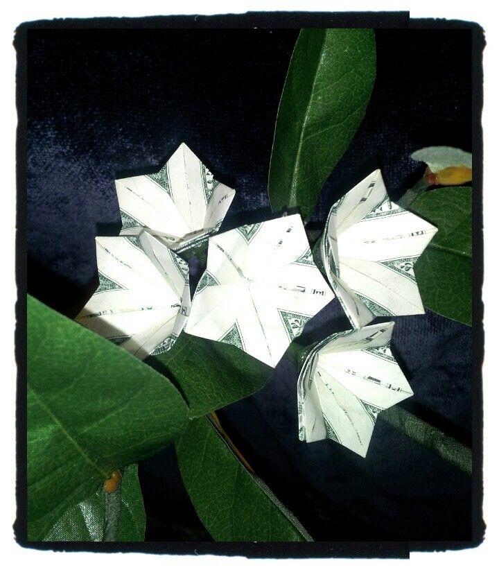 Plumeria Plumeria Plant Leaves Money Origami