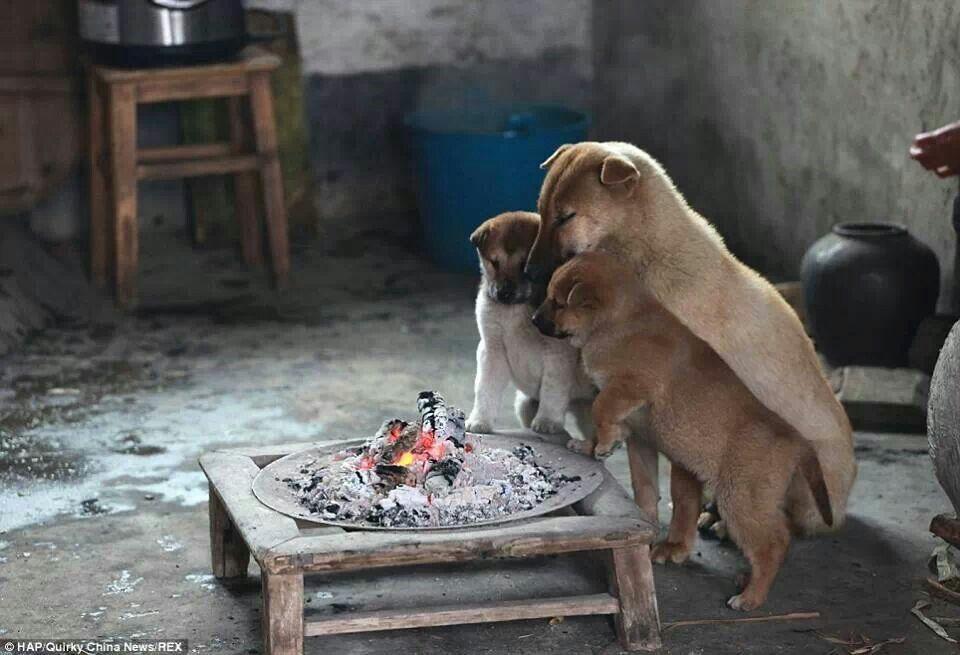 Warm Up ล กหมา น าร ก