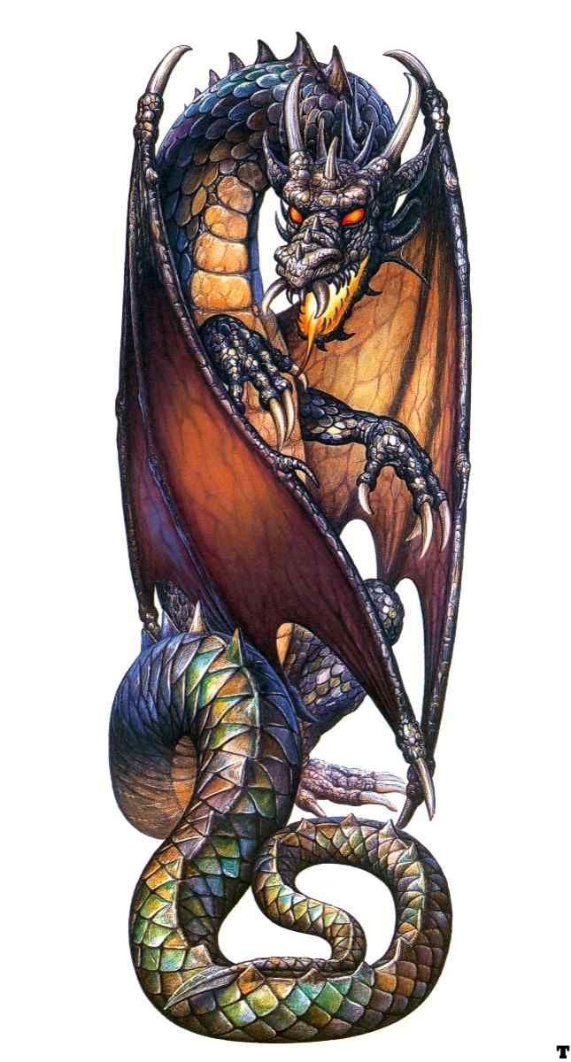 Ciruel Cabral Earth Dragon Eskiz Drakona Risunki Drakonov Keltskij Drakon